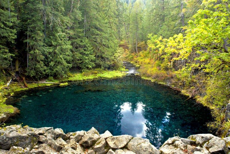 Ritratto dell'Oregon immagine stock libera da diritti