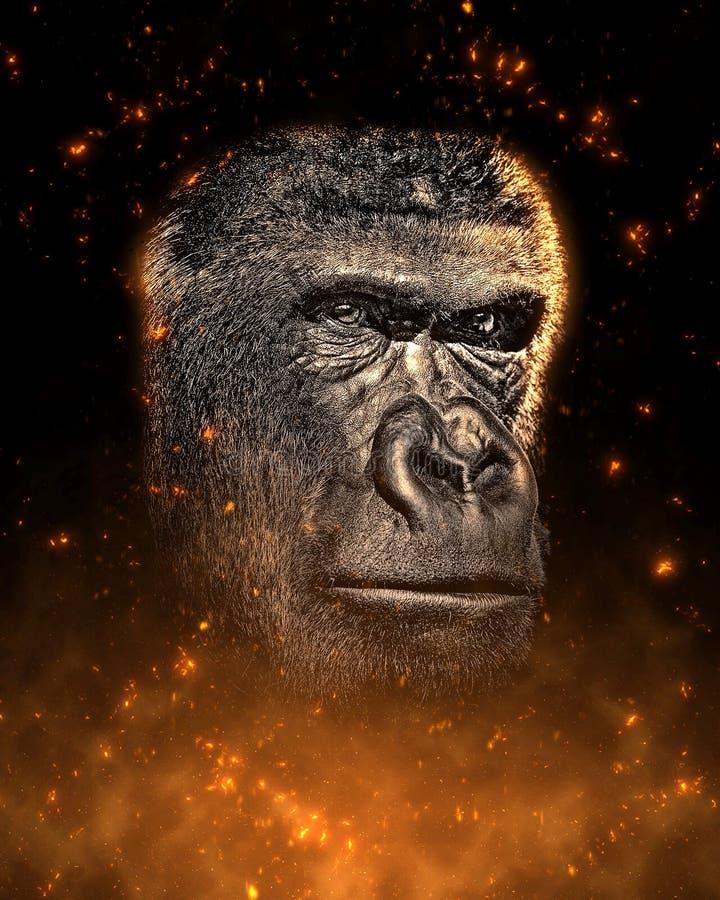 Ritratto della scimmia in fuoco immagine stock