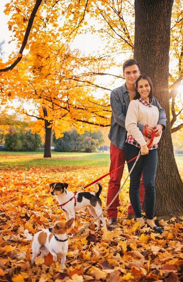 Ritratto delle coppie con due piccoli cani sulla passeggiata in parco fotografia stock libera da diritti