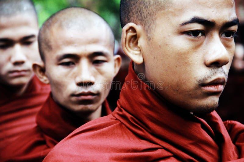 Ritratto delle rane pescarici del Myanmar nella riga immagini stock