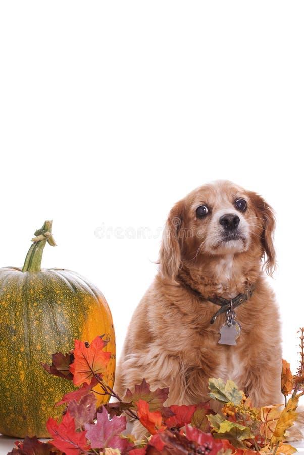 Ritratto di caduta del cane immagine stock libera da diritti