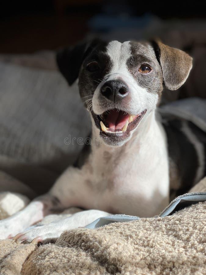 Ritratto di cane felice fotografie stock libere da diritti