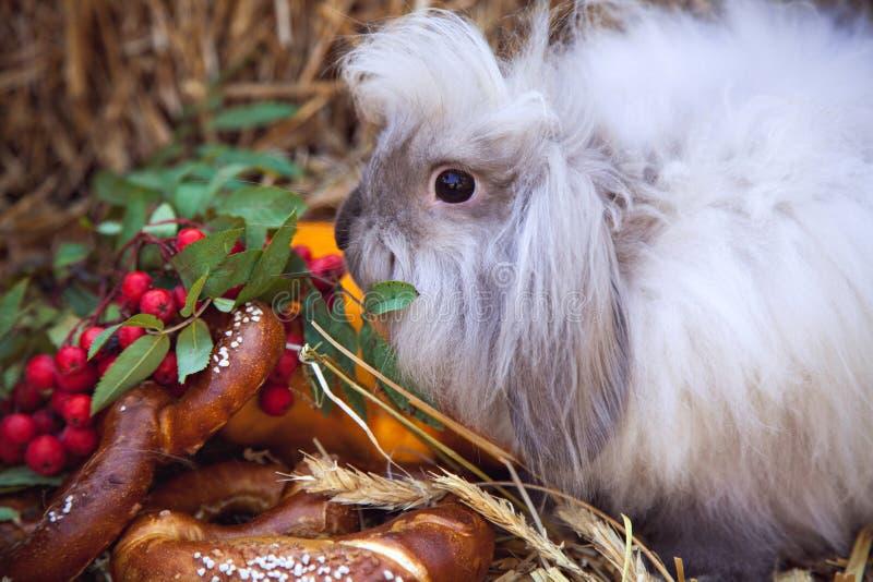 Ritratto di coniglio con l'alimento di caduta fotografia stock