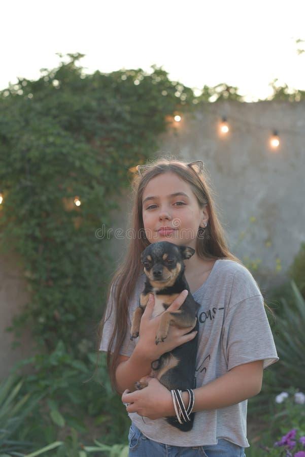 Ritratto di estate di una giovane donna sulla natura con una chihuahua della razza del cane immagine stock libera da diritti