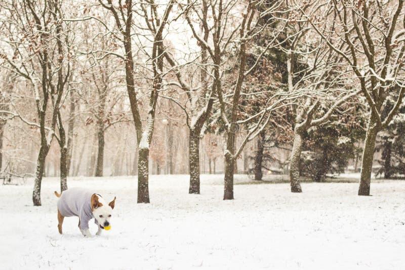 Ritratto di gioia di inverno del cane immagine stock