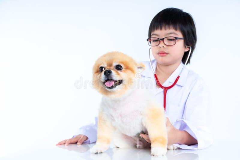 ritratto di giovane veterinario femminile che controlla sul cane di Pomeranian in clinica veterinaria r fotografia stock