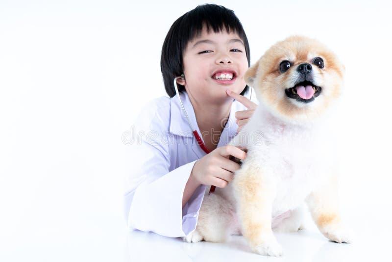 ritratto di giovane veterinario femminile che controlla sul cane di Pomeranian in clinica veterinaria r immagine stock libera da diritti