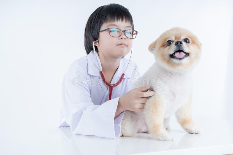 ritratto di giovane veterinario femminile che controlla sul cane di Pomeranian in clinica veterinaria r immagini stock libere da diritti