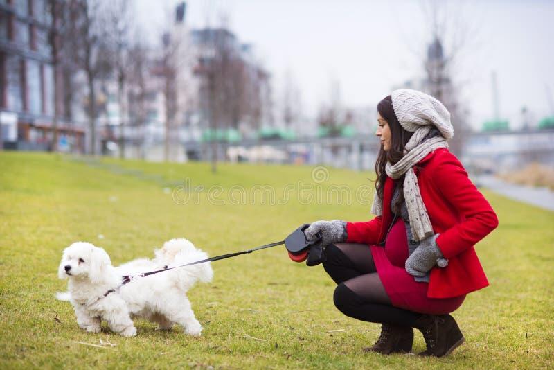 Ritratto di inverno dei cani di camminata della donna incinta immagini stock