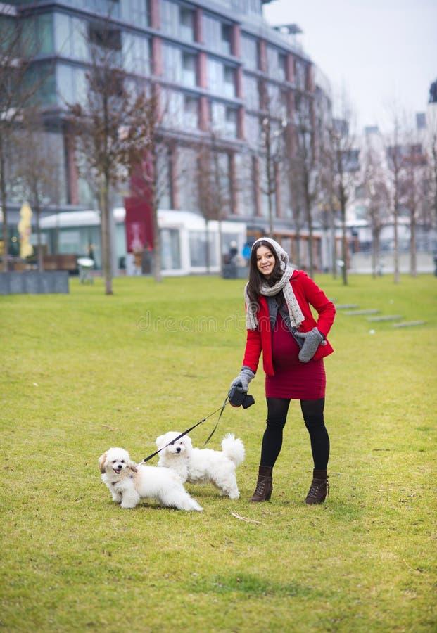 Ritratto di inverno dei cani di camminata della donna incinta fotografia stock