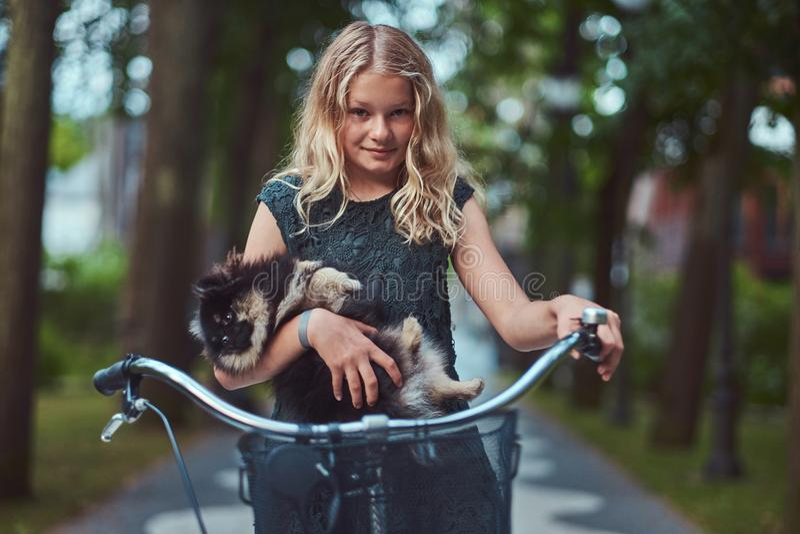 Ritratto di piccola ragazza bionda in un vestito casuale, cane sveglio dello spitz delle tenute Giro su una bicicletta nel parco immagine stock