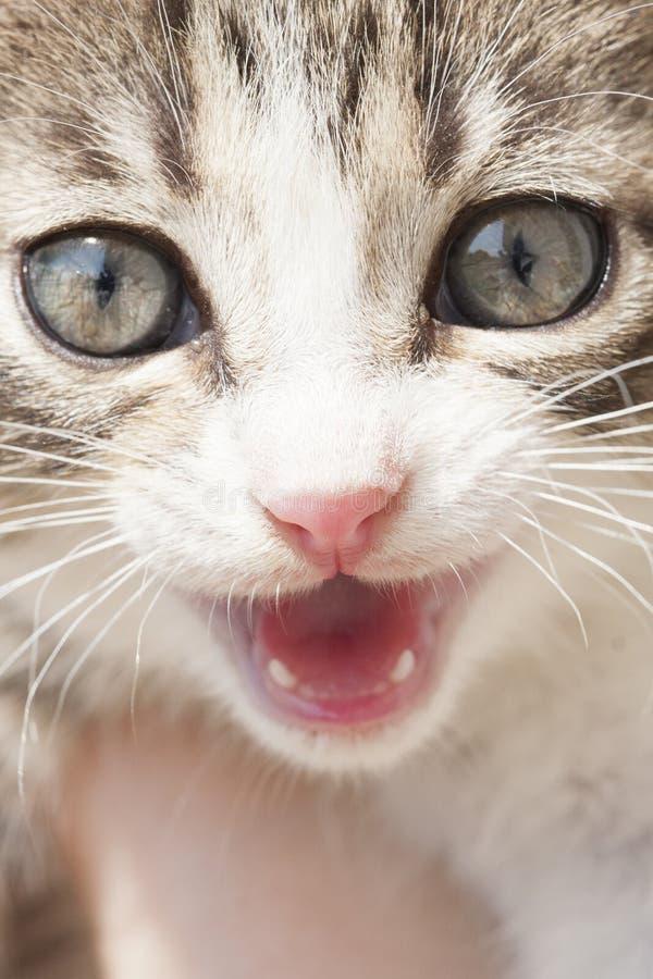 Ritratto di piccolo gatto immagini stock libere da diritti