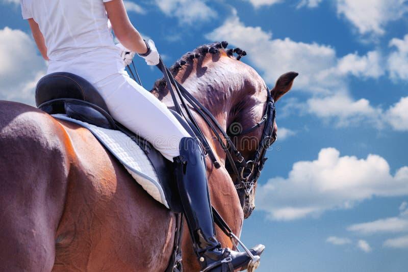 Ritratto di stallone e cavaliere di dragaggio contro cielo azzurro fotografia stock