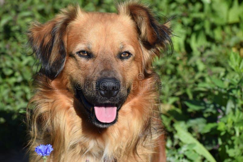 Ritratto di un cane fotografia stock