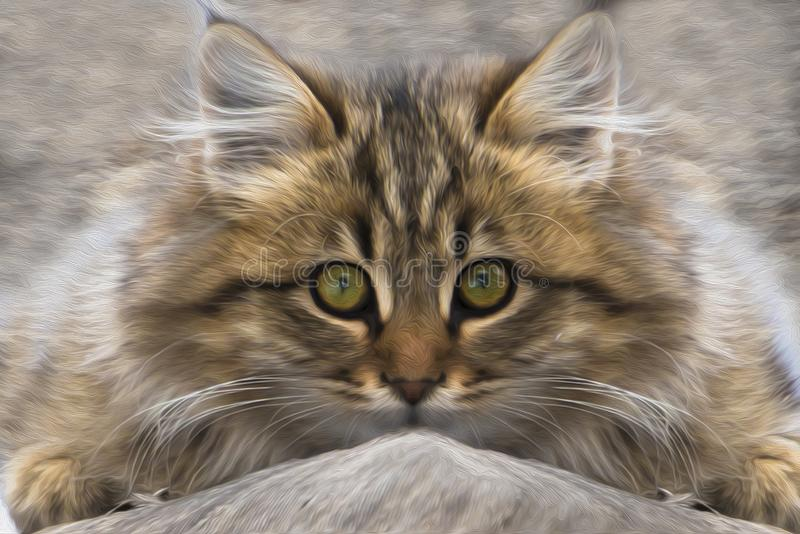 Ritratto di un gattino che sta nascondendosi immagine stock