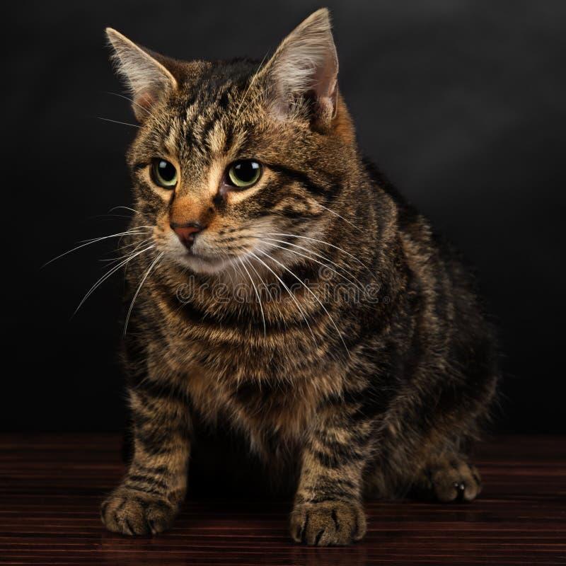 Ritratto di un gattino sveglio del soriano che si siede sul pavimento fotografia stock