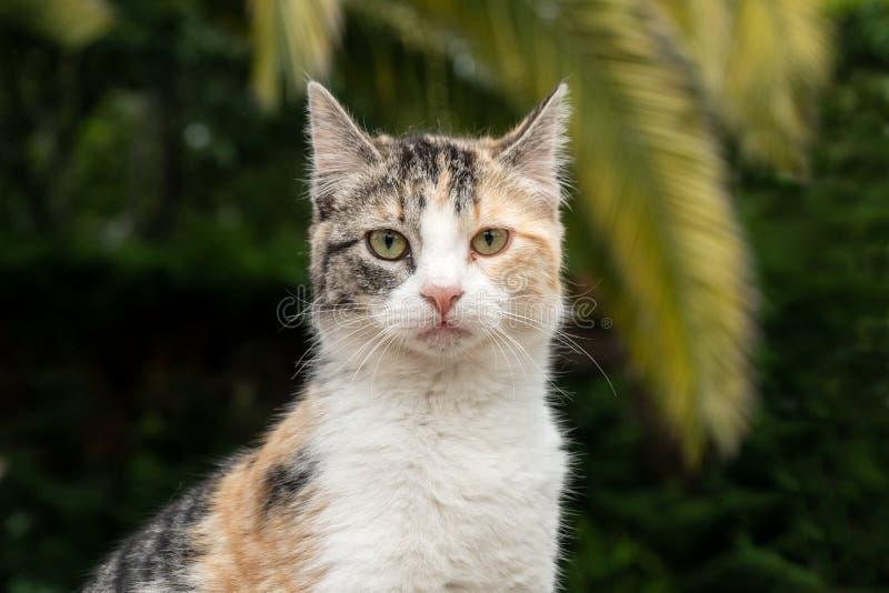 Ritratto di un gatto che esamina la macchina fotografica fotografia stock libera da diritti