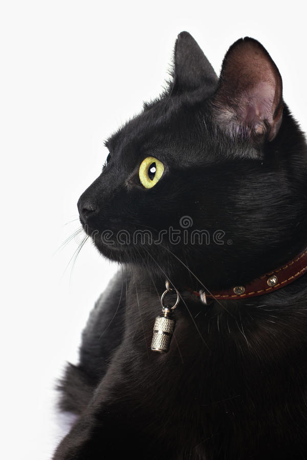 Ritratto di un gatto nero immagini stock libere da diritti