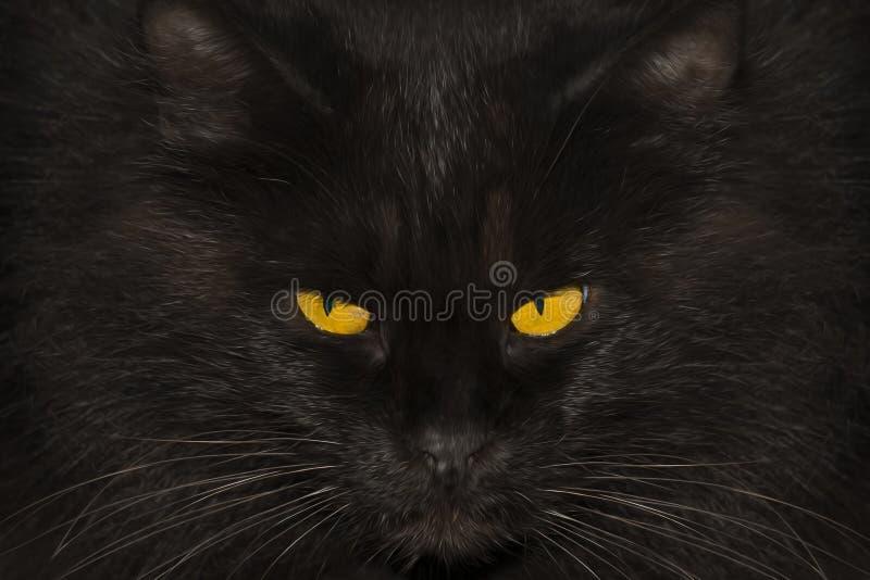Ritratto di un gatto nero, primo piano immagini stock