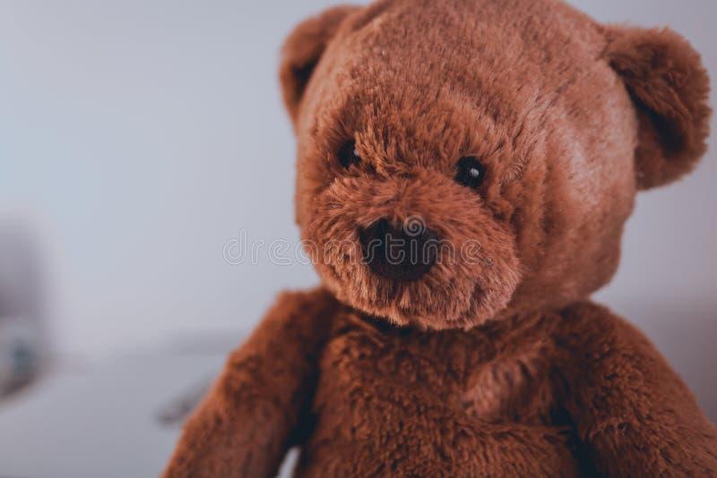 Ritratto di un orsacchiotto sveglio fotografia stock libera da diritti