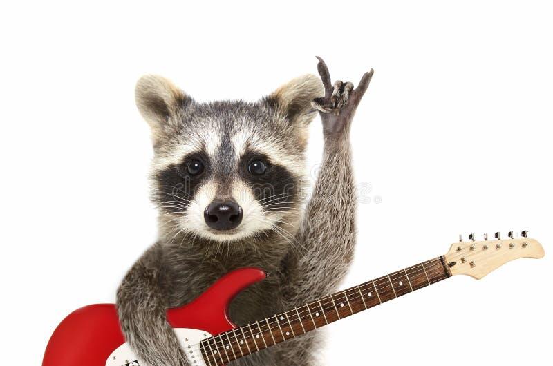 Ritratto di un procione divertente con la chitarra elettrica, mostrante un gesto della roccia immagini stock