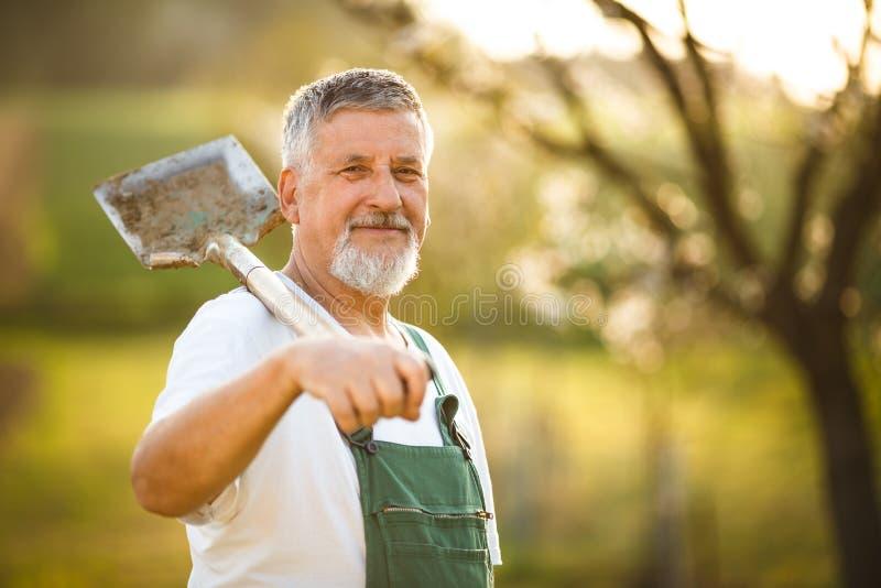Ritratto di un uomo senior bello che fa il giardinaggio nel suo giardino, immagini stock