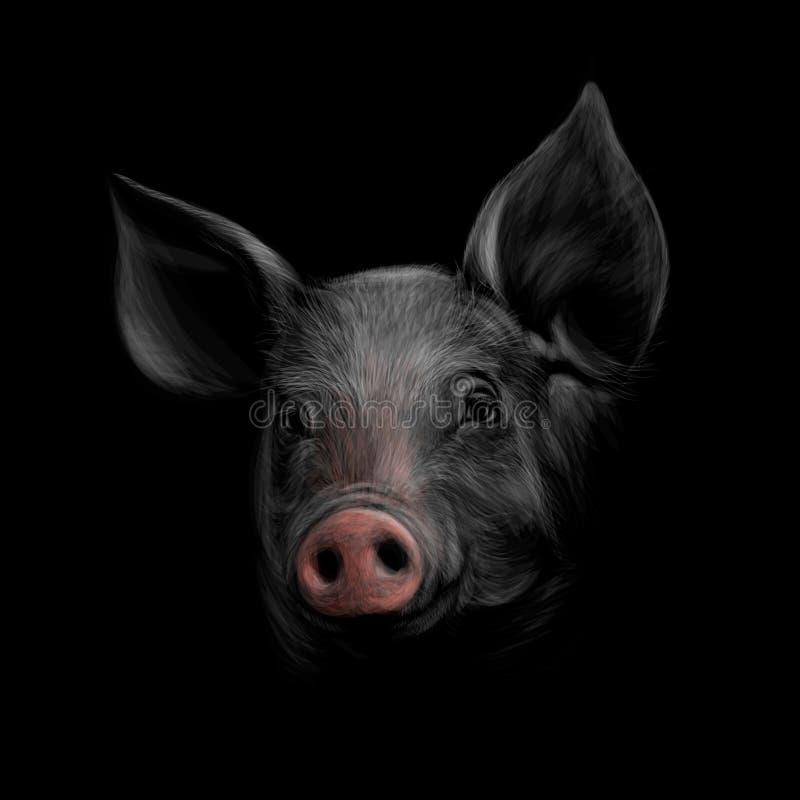 Ritratto di una testa del maiale su un fondo nero Anno cinese del segno dello zodiaco di maiale