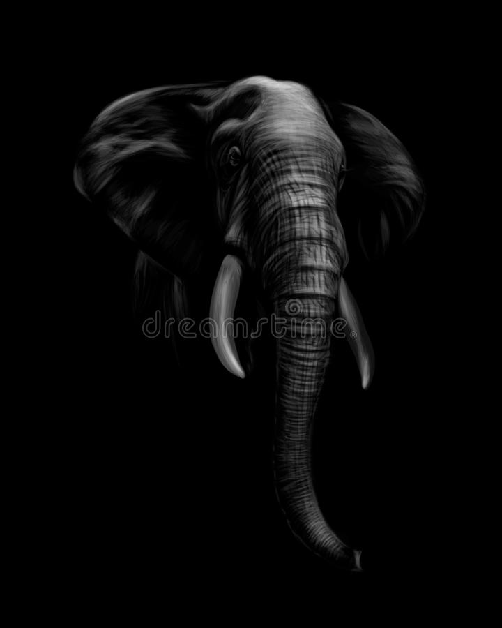 Ritratto di una testa dell'elefante su un fondo nero illustrazione vettoriale