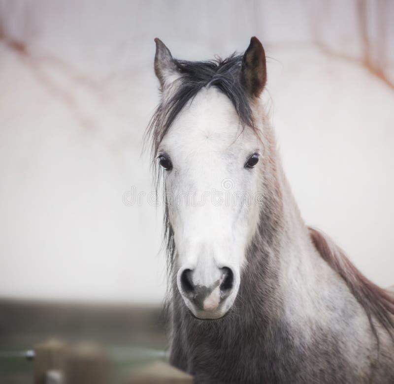 Ritratto di una testa di cavallo con una museruola bianca fotografia stock libera da diritti