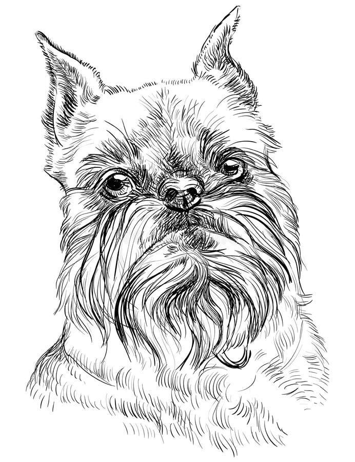 Ritratto di vettore del cane di grifone di Bruxelles illustrazione di stock