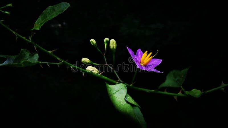 Ritratto di Widesh di un fiore, con la banana quattro fotografia stock libera da diritti