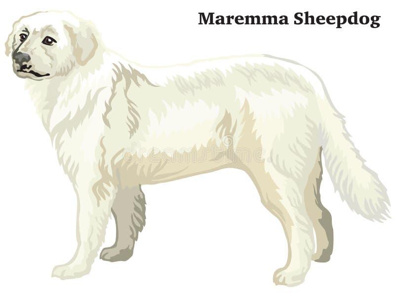 Ritratto diritto decorativo colorato dell'illustrazione di vettore del cane pastore di Maremma illustrazione vettoriale