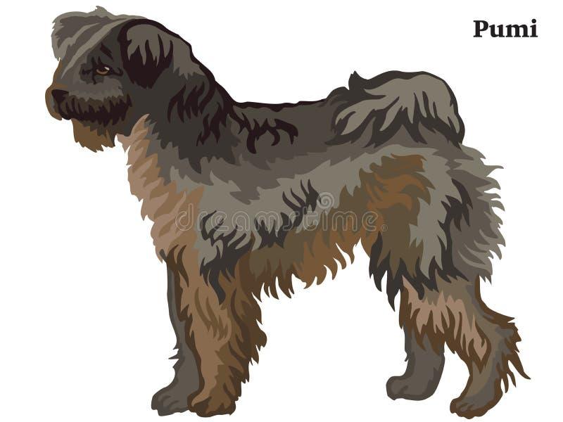 Ritratto diritto decorativo colorato dell'illustrazione di vettore del cane di Pumi royalty illustrazione gratis
