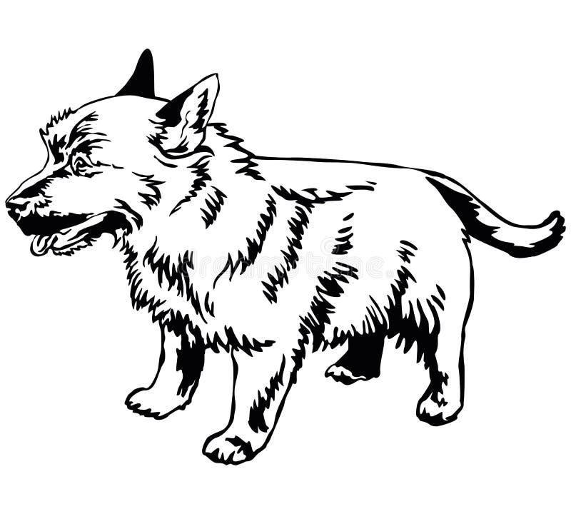 Ritratto diritto decorativo del illus di vettore del terrier di Norwich del cane illustrazione di stock