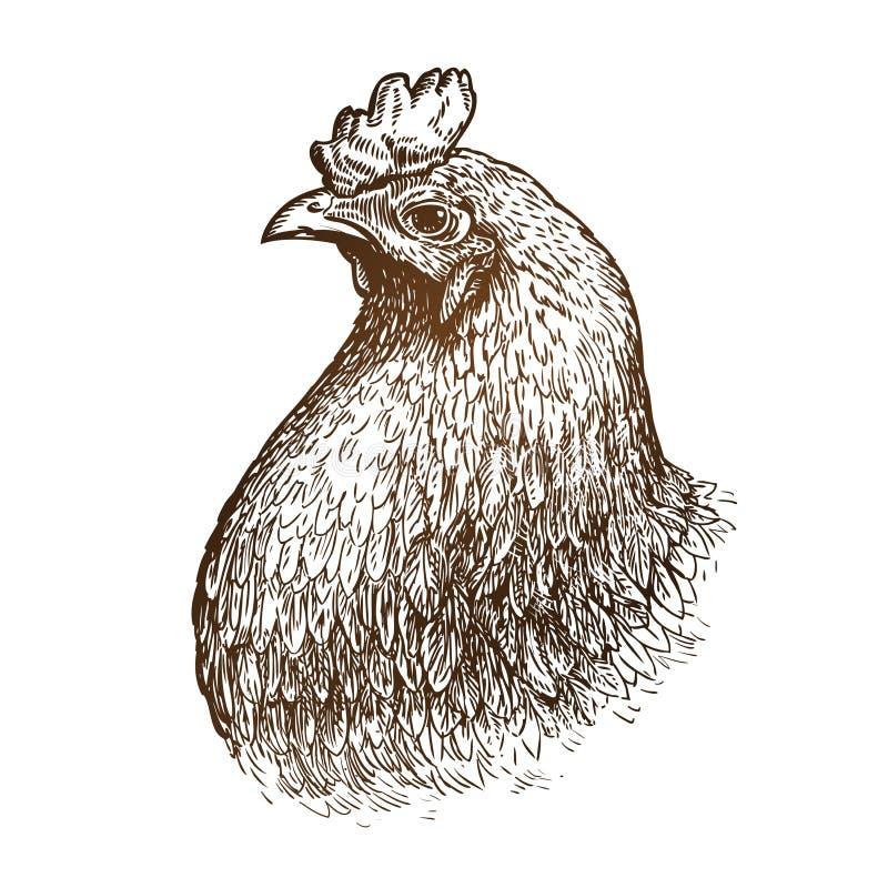 Ritratto disegnato a mano del pollo Azienda avicola, animale, schizzo del gallo Illustrazione d'annata di vettore royalty illustrazione gratis