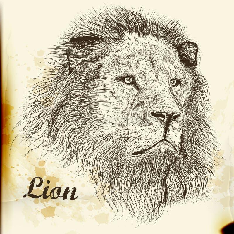 Ritratto disegnato a mano di vettore del leone royalty illustrazione gratis