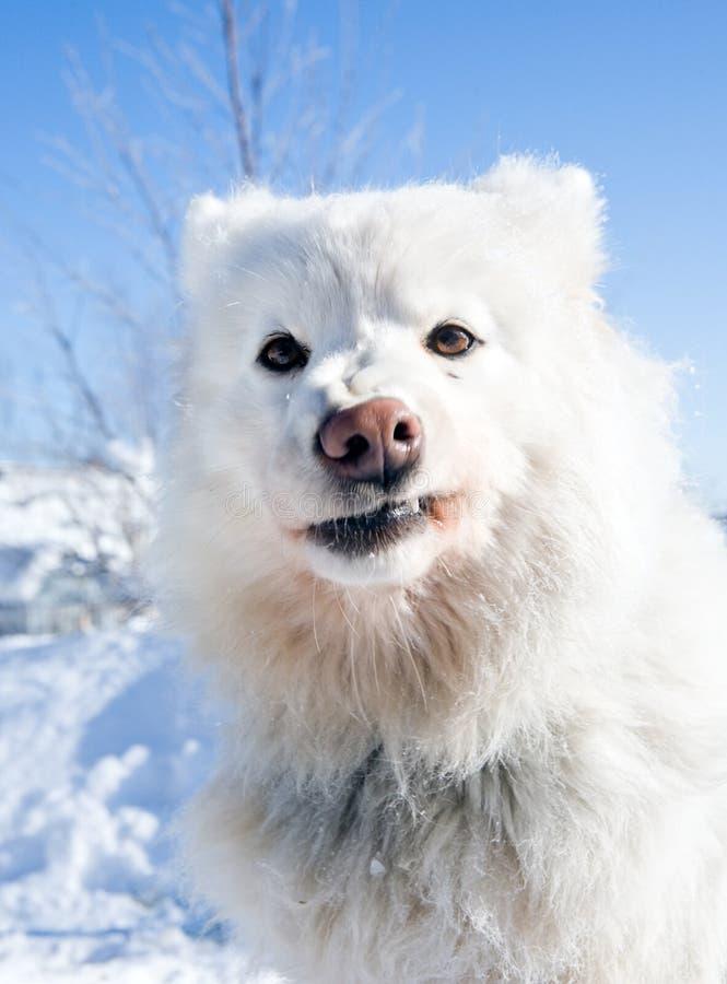 Ritratto divertente del cane fotografie stock