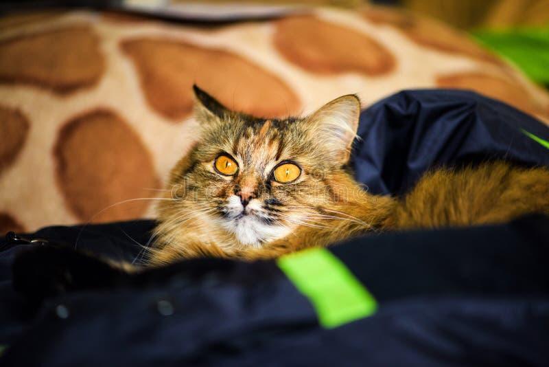 Ritratto divertente del gatto immagine stock