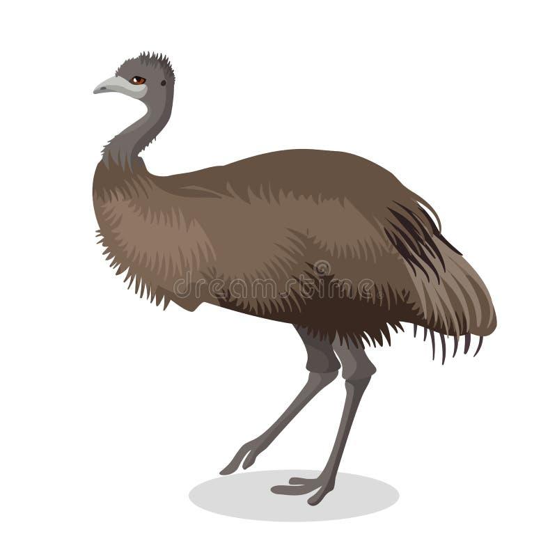 Ritratto integrale dell'uccello dell'emù isolato su fondo bianco illustrazione vettoriale