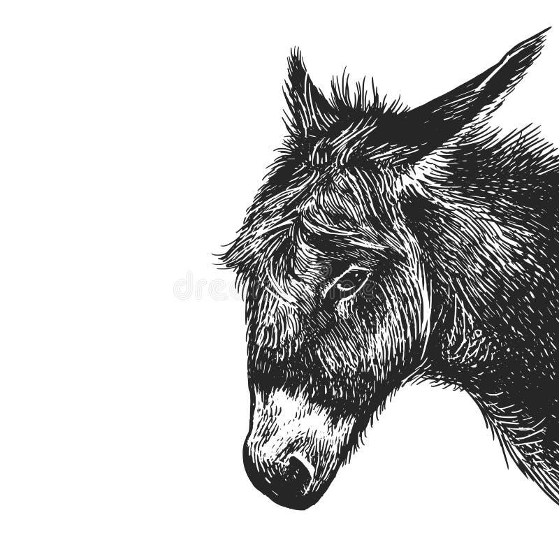 Ritratto realistico dell'asino dell'animale da allevamento Incisione d'annata blA royalty illustrazione gratis