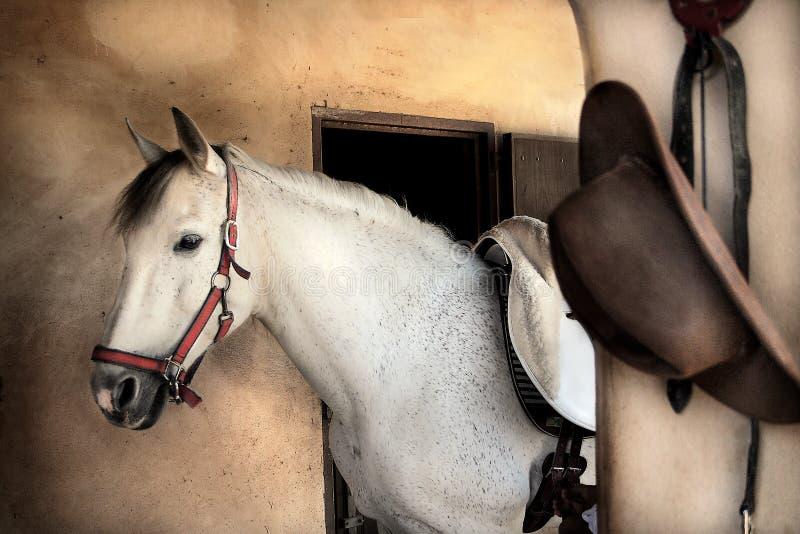 Ritratto romantico del cavallo?. fotografia stock