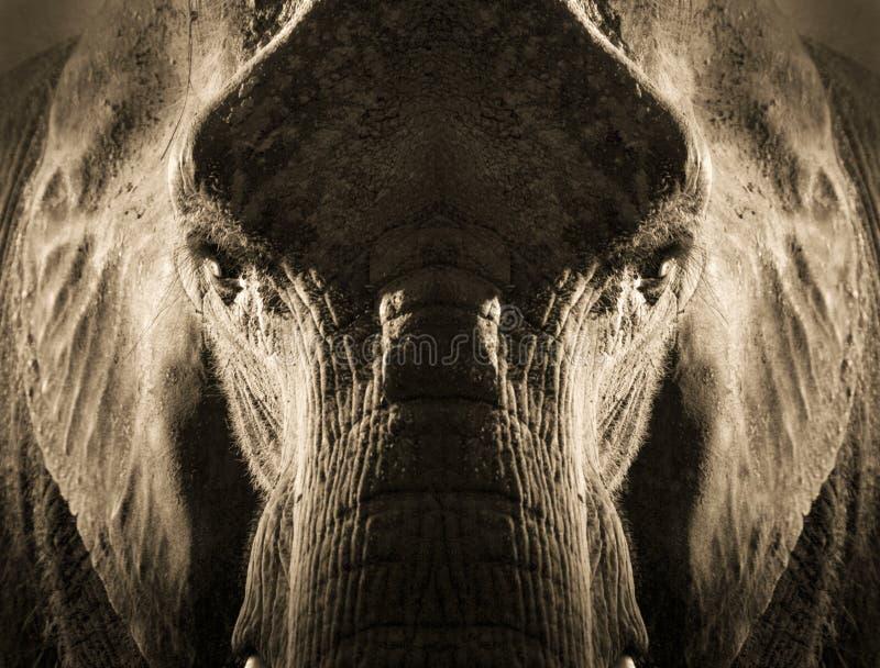 Ritratto simmetrico artistico dell'elefante nella seppia Tone With Dramatic Backlighting fotografia stock