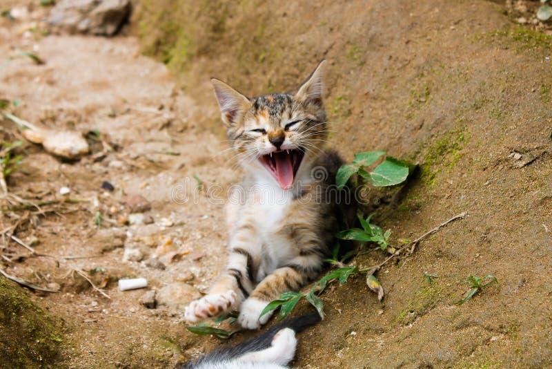 Ritratto sorridente del gattino del bambino immagini stock