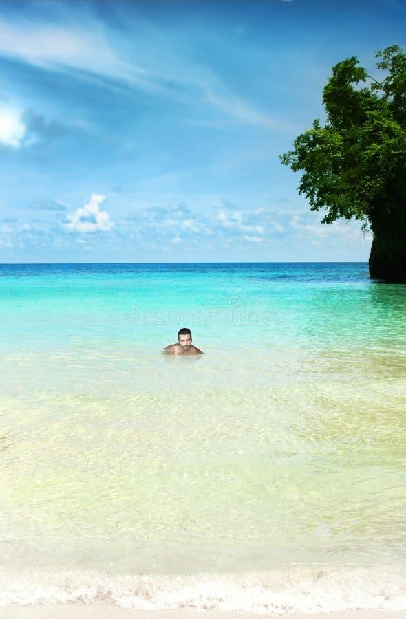 Ritratto tropicale immagine stock libera da diritti
