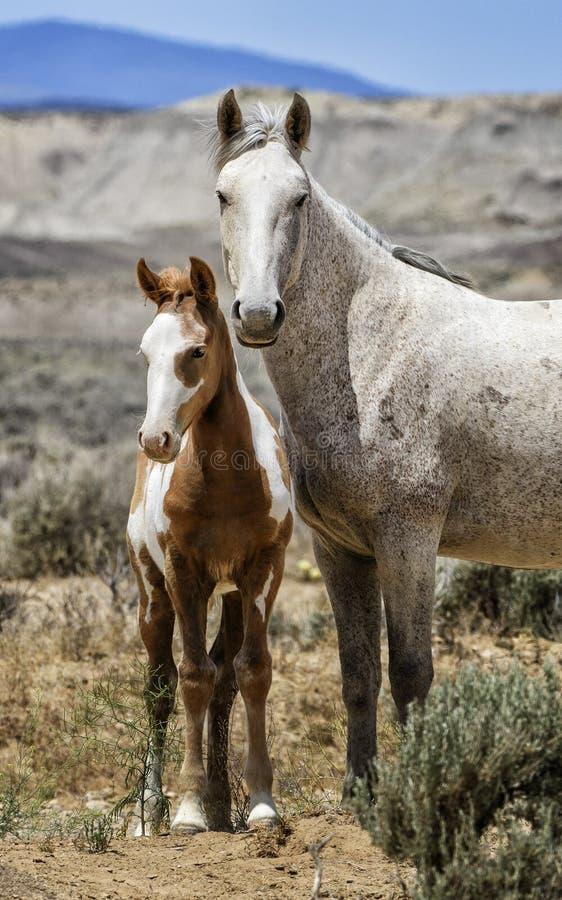 Ritratto verticale della famiglia del cavallo selvaggio del lavabo della sabbia immagini stock