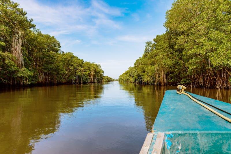 Ritt för Caroni flodfartyg till och med den täta mangrovereflexionsnaturen Trinidad och Tobago arkivfoto