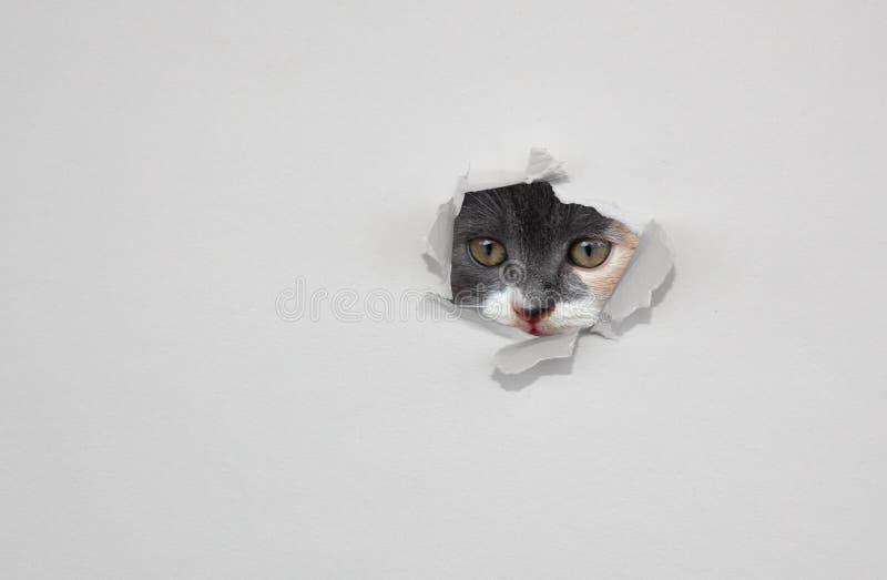 Ritten regardant par le trou en livre blanc Concept de curiosité ou de vigilance photo stock