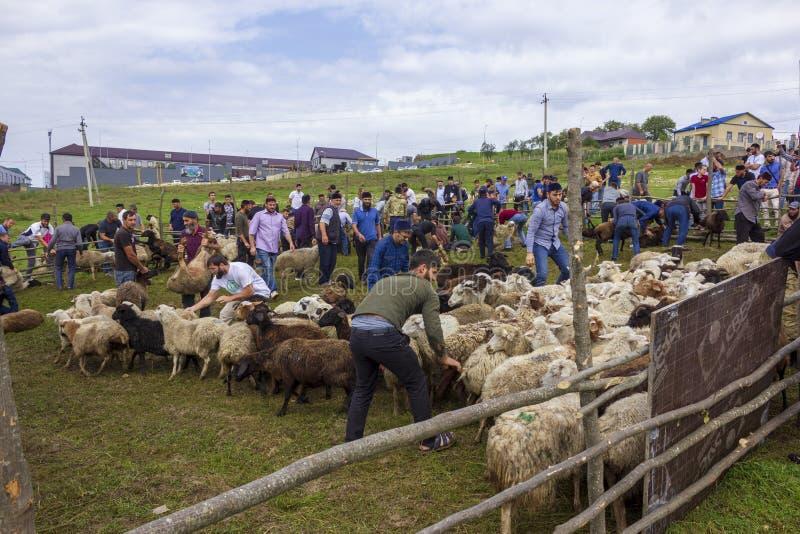 Ritual sacrifice during the festival of Eid al Adha, Shira Bena Yurt, Chechen Republic, Russian region, Caucasus Mountains. 10.08.2019 stock photos