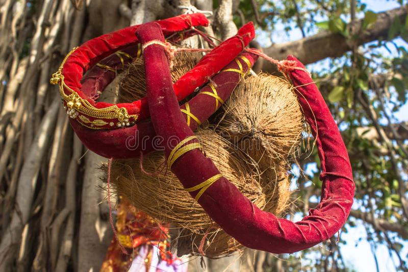 Download Rituale Di Hinddu: La Lunga Vita Del Marito Immagine Stock - Immagine di marito, albero: 55360805