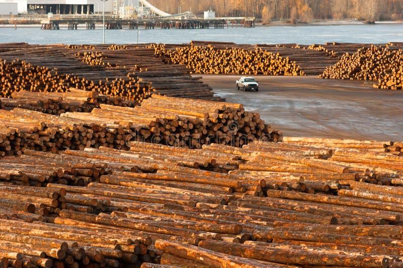 Riva del fiume di legno Colombia dell'impianto di lavorazione del legname del ceppo del grande legname immagine stock libera da diritti